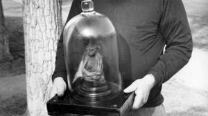 Nel giugno 1934, due cercatori d'oro, che avevano scavato e setacciato l'oro tra le montagne di San Pedro nel Wyoming, si sono imbattuti in un piccolo antro sepolto nella profondità della roccia. Quando la polvere cominciò a stabilirsi, i cercatori hanno fatto una scoperta sorprendente – i ben conservati, ma a lungo dimenticati, resti di […]