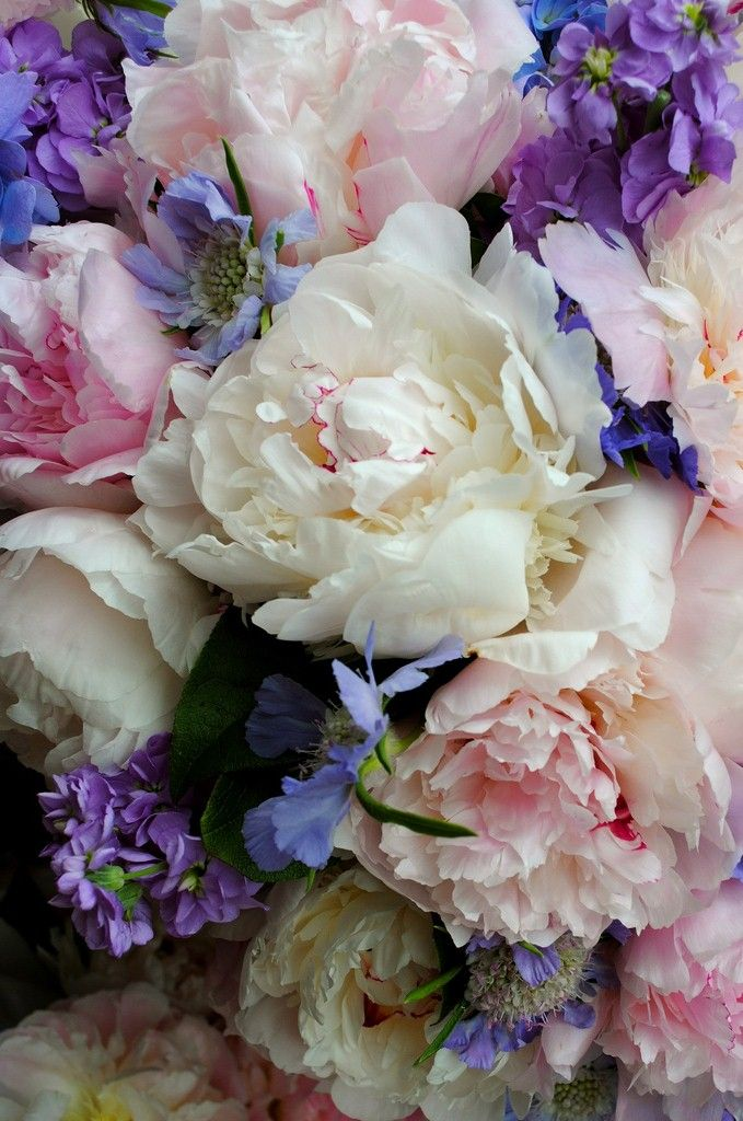 Purple pink white flowers Peonies... Pretty as