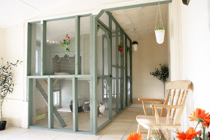 Aristocat Luxury Cat Hotel offers 5* accommodation with immaculate and spacious rooms all with heated pads and windows