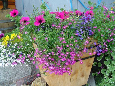 Alaska Flower Pot (540 pieces)