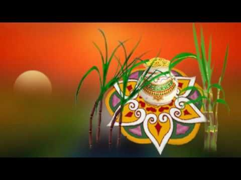 Wishes with Pongal Graphics, Pongal Greetings, Pongal Images, Pongal Photos and Pictures for Orkut, Facebook, other Social Network Websites.