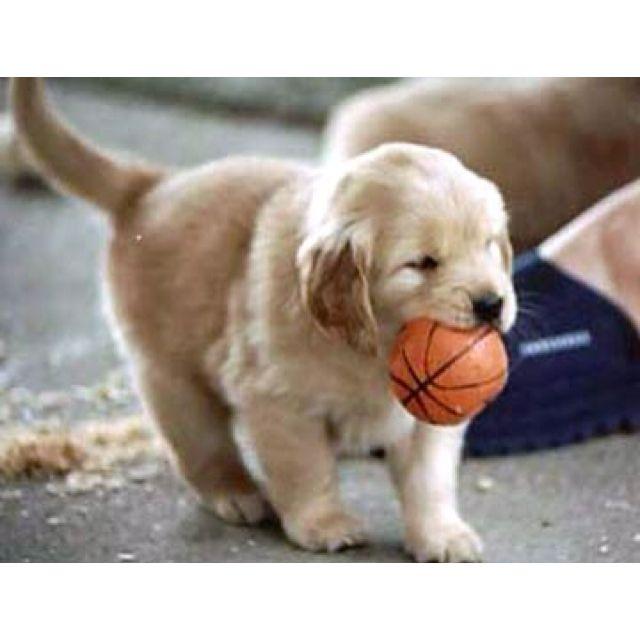 ... Baby golden retriever on Pinterest | Posts, Golden retriever puppies Golden Retriever And Baby
