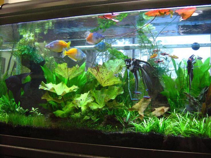 25 Best 100 Gallon Aquarium Ideas On Pinterest