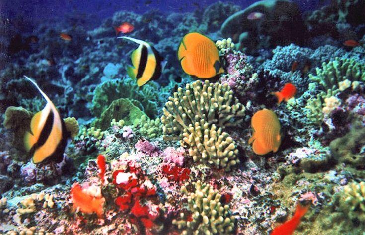 Barriere coralline: una mappa per descriverne lo stress.