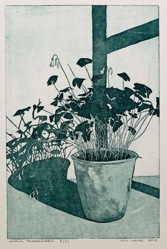 Oxalis Triangularis Etching Print by williamwhiteart on Etsy, $80.00