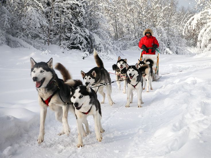 Escapade Eskimo. Come enjoy a memorable dog sledding experience in the scenic Outaouais region only 75 minutes from Ottawa. For more information on Sports & Leisure visit: www.ottawatourism.ca/en/visitors/what-to-do/sports-and-leisure