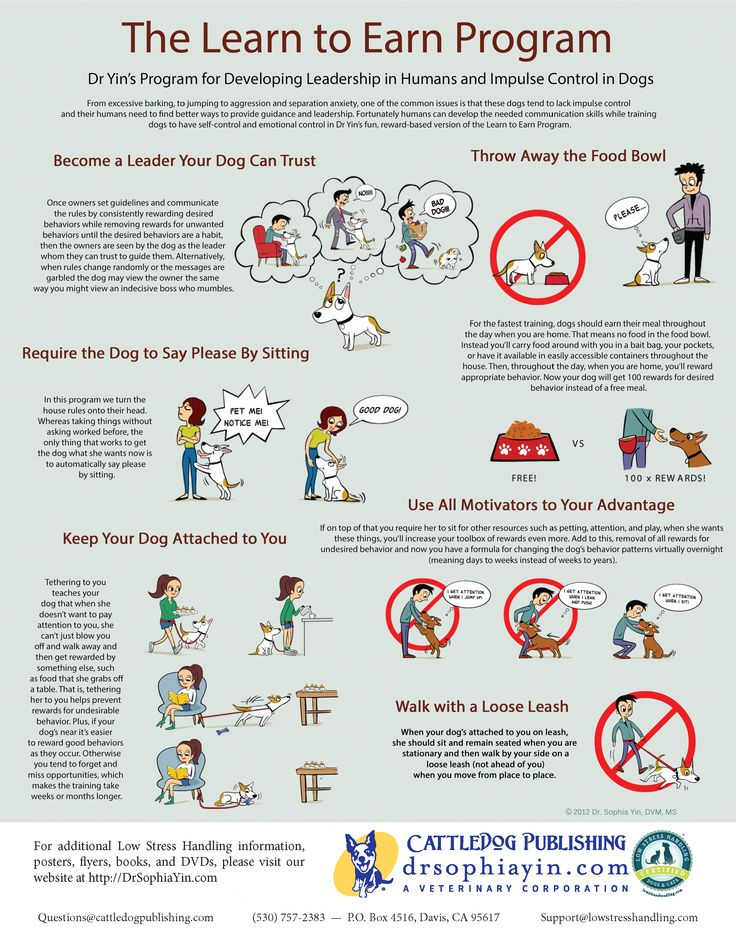 When To Start Dog Training Classes Ideas