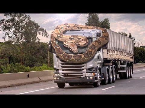 놀라운 장면-뱀 공격 자동차!
