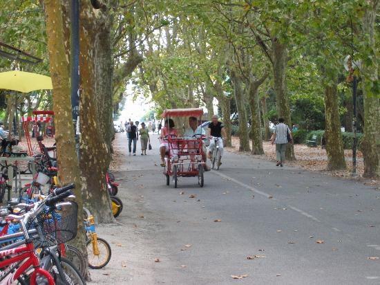 #Viareggio Italy la meravigliosa #pineta