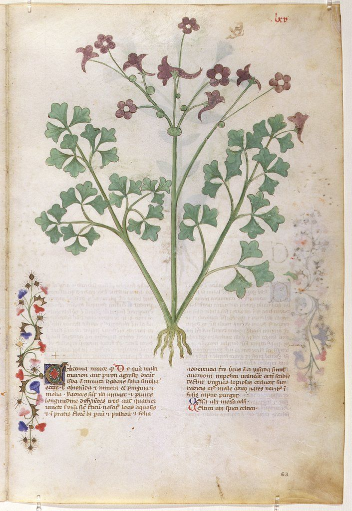 On Plants - Grassi, Giovannino de', approximately 1340-1398 Grassi, Salomone de', active 1399-1400