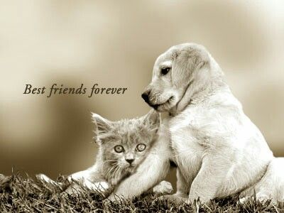 Look it the Cute dog with cat