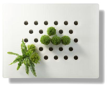 mur de plantes