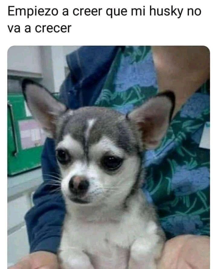 Pin De Juan Ignacio En Memes En 2020 Mascotas Memes Memes De Perros Chistosos Memes Perros