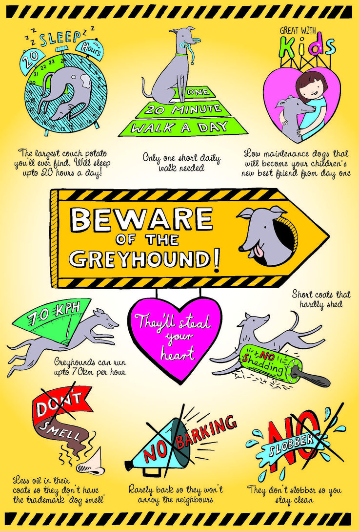 Do you know the benefits of owning a greyhound #dog? These loveable pups are great pets! Learn more about them here!