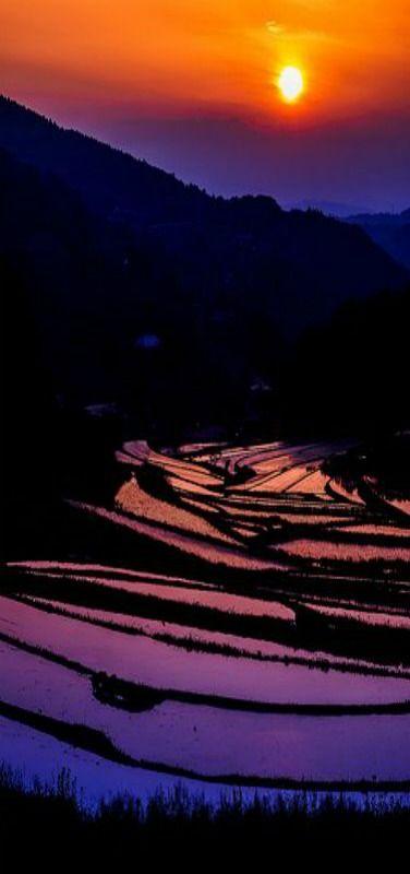 Terraced Rice Fields, Takuma, Okayama, Japan   by Takuma Kimura