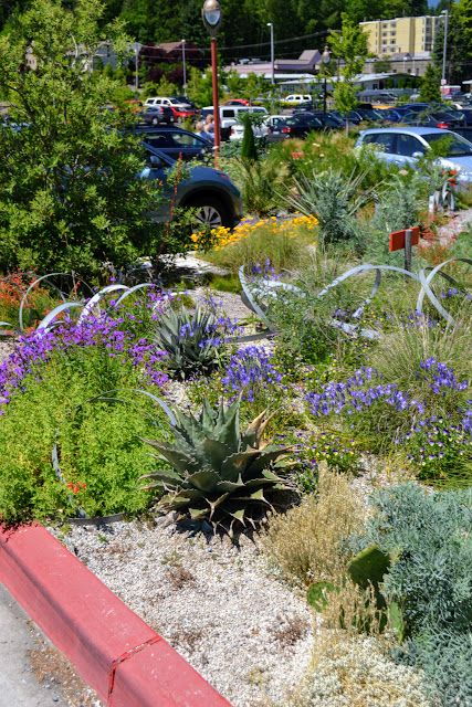 78 best Xeric Gardens images on Pinterest | Landscaping, Landscaping ...