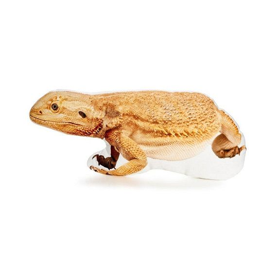 Bearded Dragon Bearded Dragon Gift Reptile Gifts Yellow