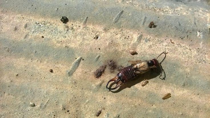 Un insecte mort a la vorera XD