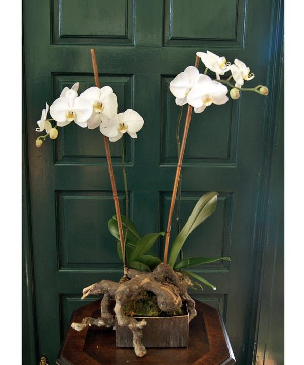Double Orchid With Natural Driftwood For The Home Triasflowers Flower Delivery Orchids Flowers
