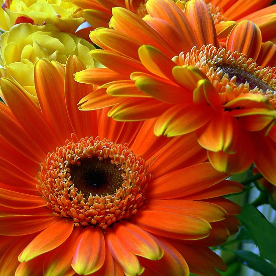 ~~ Flowers from my date... ~~