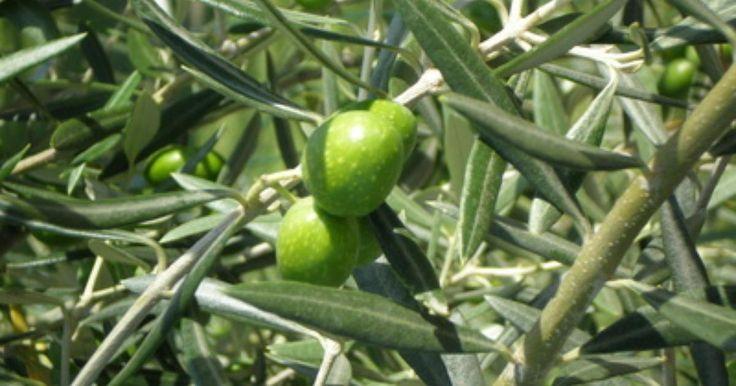 Cómo hacer pintura verde olivo pardusco