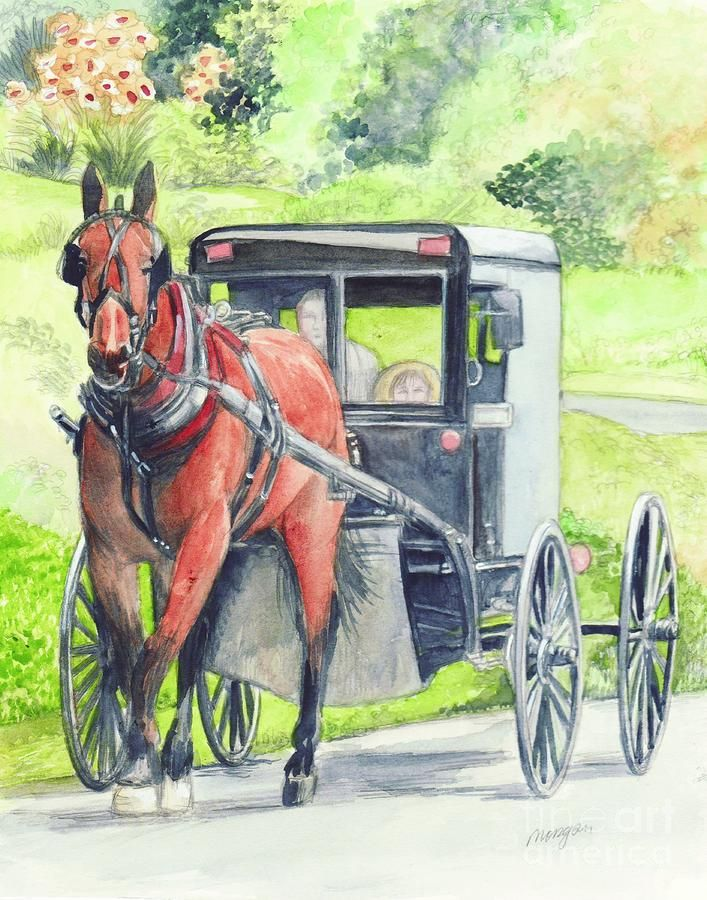 Amish Farm Canvas Print Canvas Art By Sharon Woods
