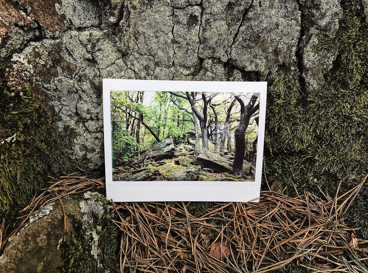 https://flic.kr/p/ViEjbc   that1with the hike, & all about taking that first step.   #fujiFilm #instax #instantPhotography #polaroid #polaroidWeek #roidWeek #spring #autumn #fall #leaves #forest #trees #wood #landscape #nature #stone #hiking #mountain
