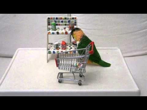 http://www.petcarevision.com/Parrot/caique-parrots.php