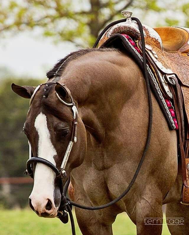 Sweet Western horse.