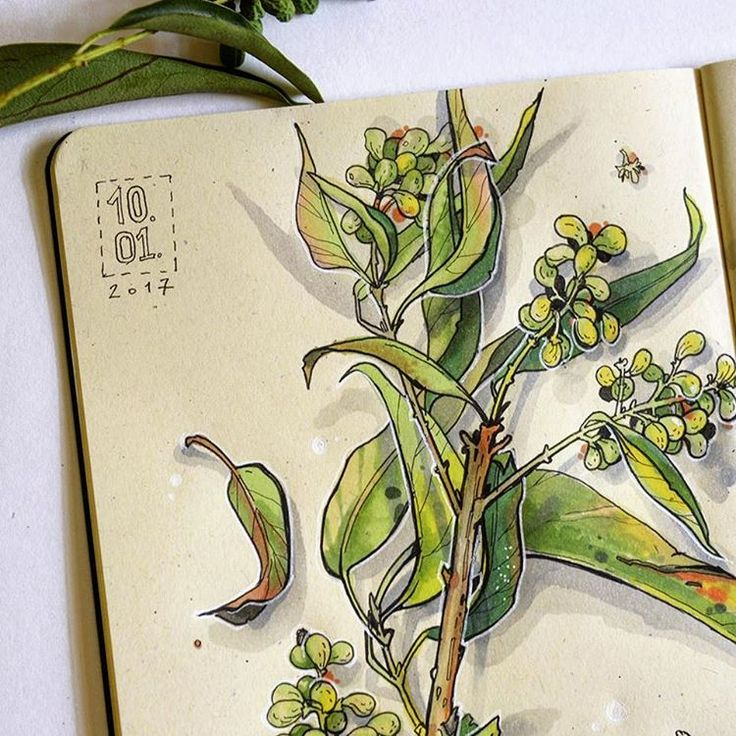 #sketch #sketchbook #pattern  #aquarelle #watercolor #art #drawing #aquarela #botanic #nature #natureza #desing #topcreator #art_we_inspire #plusdrawing #watercolour #canson #anstaart #instagrambrasil #eunadraw #russia #vscobrasil #vsco #Illustration