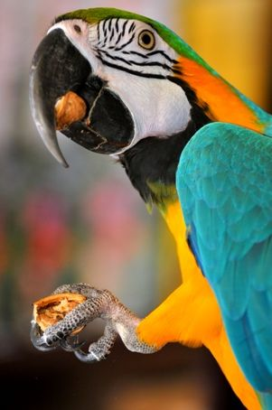Scheduled Feedings or Free Feeding For Your Bird? - Bird Pet Care Corner - PetSolutions