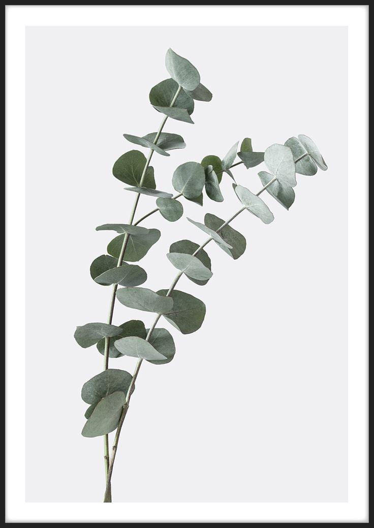 Eucalyptus, från Insplendor tryckt med Giclée Fine Art Print-teknik