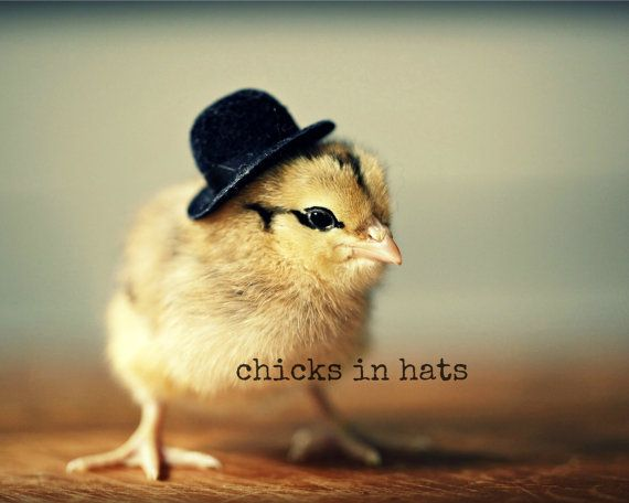 Photo Print 8x10 Chick Wearing A Derby Hat by chicksinhats on Etsy, $20.00