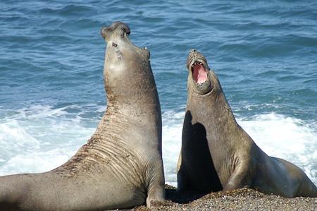Punta Delgada @ Peninsula Valdez, Argentina