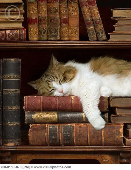 Cats and books. Truly a cozy feel