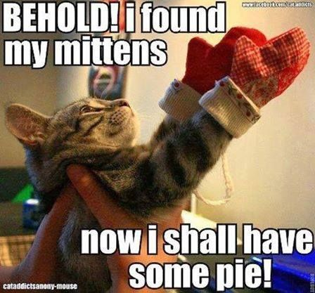 Silly Kitty:  250 Funniest Cat Memes Because Cats