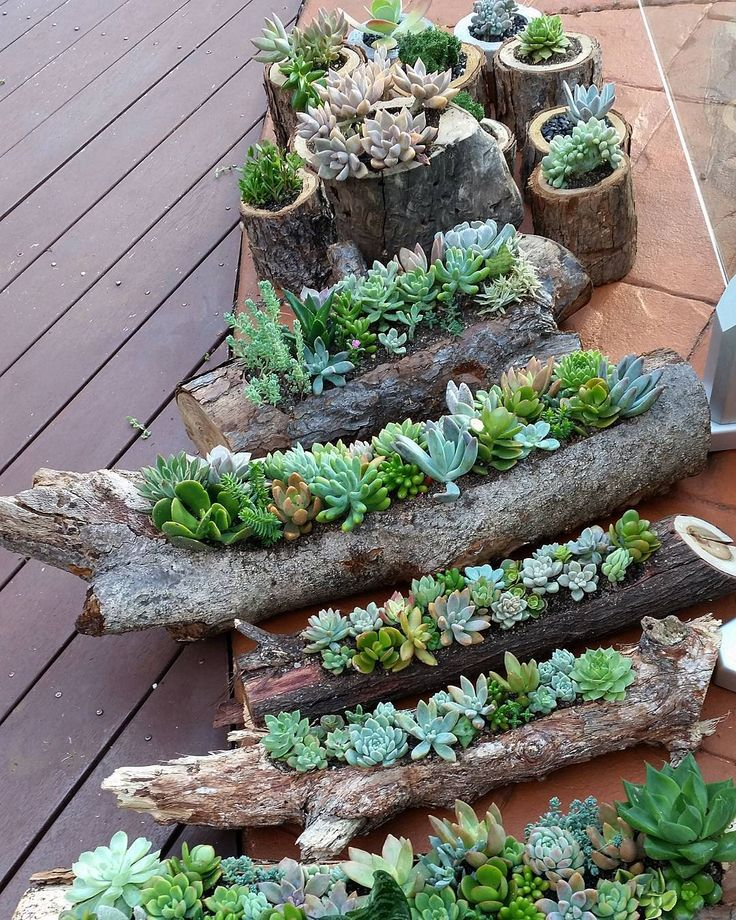 succulent gardens in hollowed out logs