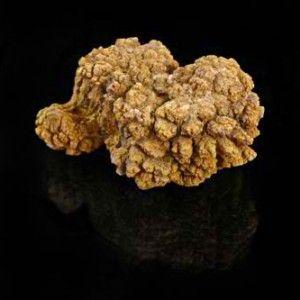 11 Coprolite Fossil Specimen