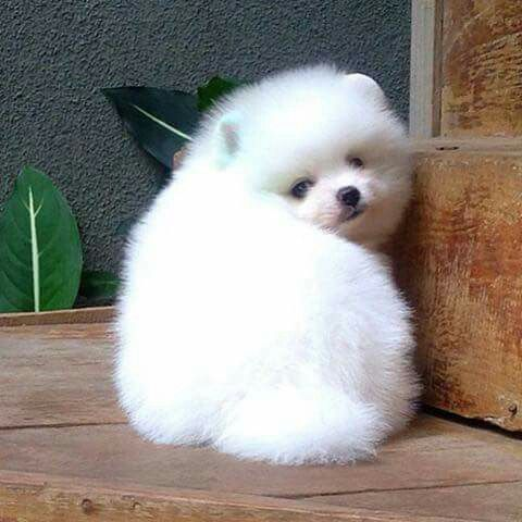his name is snowball