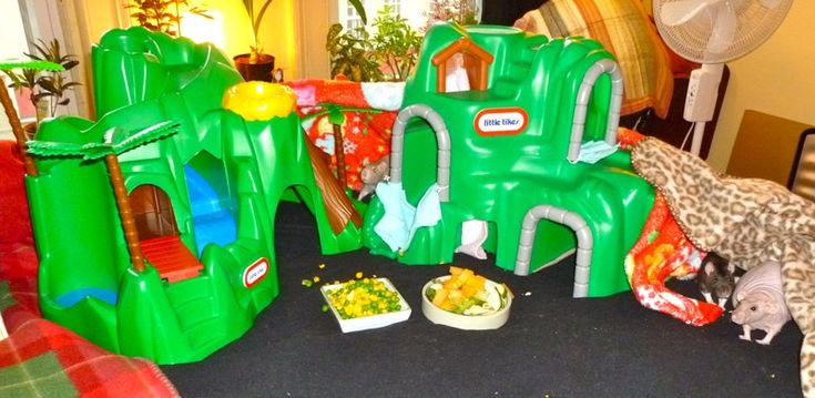 My Little Tikes Playground! Get second hand mini playgrounds for the rats. Brilliant!