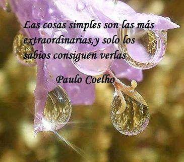 Rosa Roja Del Campo: Google+