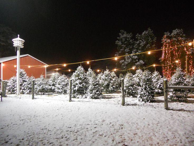 toluca lake christmas trees - HD1024×768