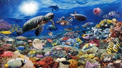 Impactante fondo marino con tortugas en un puzzle de 5000 piezas de Ravensburger - Cómpralo en Puzzlemania.
