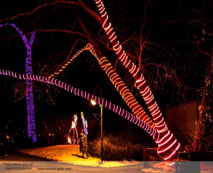 Calgary Zoo Lights.
