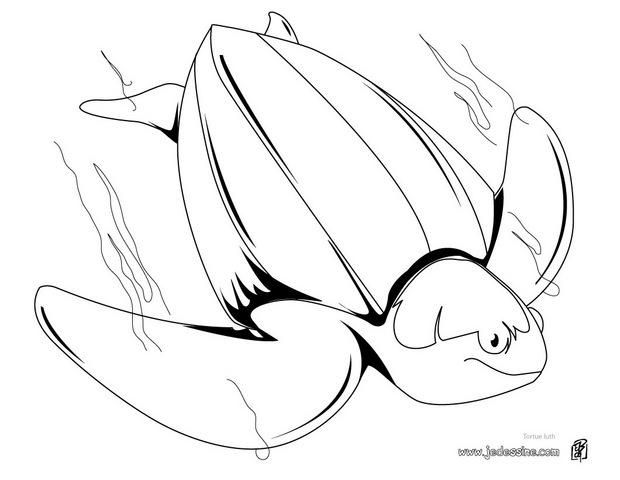 68 best coloriages animaux marins images on pinterest - Tortue a colorier ...