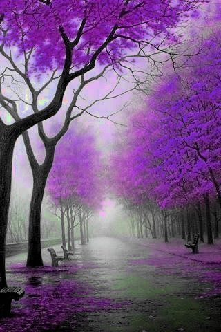 What a beautiful sight - an autumn park in purple bloom.