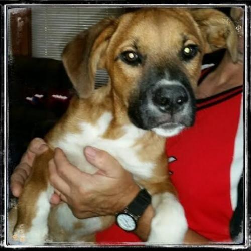 http://www.lastdaydogrescue.org/animals/browse?Species=Dog