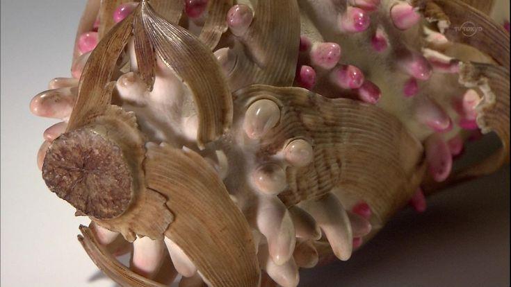 安藤緑山(大正〜昭和30年頃)『竹の子と梅』(京都三年坂美術館所蔵) 日本の象牙彫刻は牙彫(げちょう)と呼ばれ、江戸時代の印籠や煙草入れなどにつける根付け細工に始まる。明治時代の半ばに外貨獲得の国策として海外に輸出され隆盛を究めた。大正時代にブームは過ぎたが、安藤緑山が忽然と現れた。 安藤緑山は東京彫工会に所属し、御徒町に住んでいたことくらいしか分かってない。子や弟子に技術は継がれなかった。昭和30年まで生きていたらしい。 象牙という材料は均質で粘りがあり、精緻な彫刻に向く。牙彫は象牙の色や肌合いを生かす彫刻だったが、緑山は色つけをしたので異端視された。現代の牙彫師が再現を試みている(18日かけて粗彫り→左刃で掻くように削り取る→砥草や房州砂といった自然の研磨剤を使い丹念に磨きをかける→磨き分けることで物の質感の違いを生み出す→20日目で素彫り・磨きが完成→熱した酢に漬けて下処理→酸性染料で重ね塗りをして色づけ→22日目に完成。象牙は現在はワシントン条約前の在庫で作っている)
