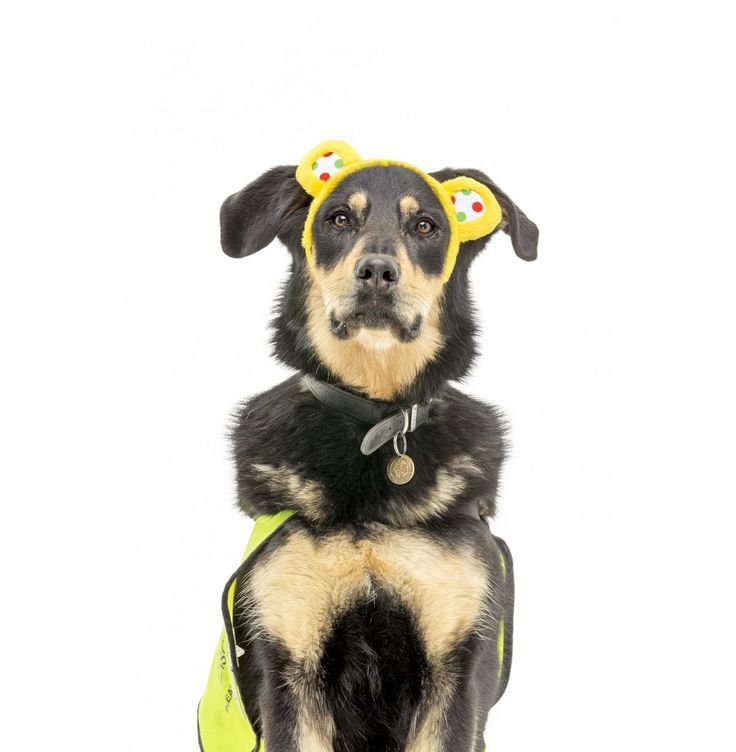 Pudsey Dog Ears - Pudsey Collection - Pudsey & Blush Bear Collection | BBC Children in Need