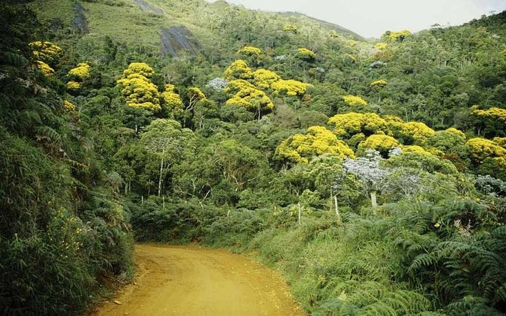 De sua área total, Ribeirão Preto tem 0,17% de Mata Atlântica, mata atlantica, sos mata atlantica, inpe, desmatamento